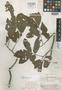 Trichilia compacta A. C. Sm., BRITISH GUIANA [Guyana], A. C. Smith 3545, Isotype, F