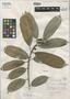 Ficus arukensis Standl., BRITISH GUIANA [Guyana], D. B. Fanshawe 2435, Holotype, F