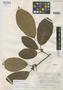 Ficus fanshawei Standl., BRITISH GUIANA [Guyana], D. B. Fanshawe 2363, Holotype, F