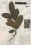 Olmedia asperula Standl., BRITISH GUIANA [Guyana], D. B. Fanshawe 148 (FD 2757), Isotype, F