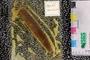 2013 Grainger Mazon Creek Holotype Digitization Project
