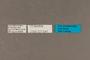 127041 Xyleus discoideus angulatus labels IN