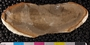 2013 Grainger Mazon Creek Holotype Digitization Project Photographed with polarized light.