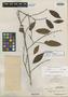 Erythroxylum borneense Merr., A. D. E. Elmer 21385, Isotype, F