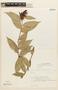 Cavendishia bracteata (Ruíz & Pav. ex J. St.-Hil.) Hoerold, BOLIVIA, F