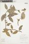 Cavendishia bracteata (Ruíz & Pav. ex J. St.-Hil.) Hoerold, VENEZUELA, F