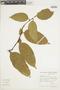 Heisteria spruceana Engl., BRAZIL, F