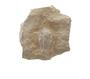 P10749_Trilobite_Phacops