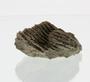 P5073_Silurian_Stromatoporoid