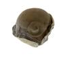 UC21976_Bumastus_trilobite