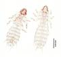 28461 Abrocomophaga chilensis PT d IN