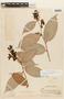 Cavendishia tarapotana var. tarapotana, PERU, F