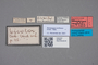 2818940 Xenopygus confusus HT labels IN