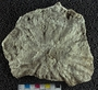 IMLS Silurian Reef digitization Project 2013, image of fossil