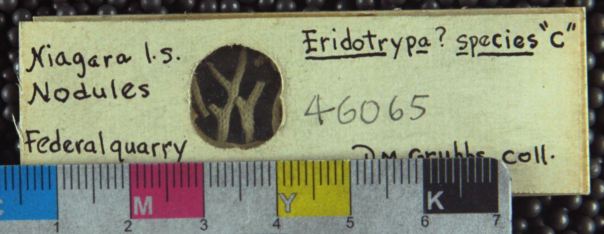 Genus: Eridotrypa