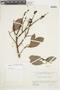 Couratari multiflora Eyma, BRITISH GUIANA [Guyana], F