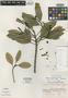Sapium rigidifolium Huft, COSTA RICA, R. W. Lent 2041, Holotype, F