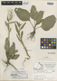 Rorippa crystallina Rollins, CANADA, J. W. Thieret 7512, Isotype, F