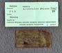 IMLS Silurian Reef Digitization Project, Image of label for a Silurian  trilobite, specimen PE 61614