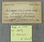 IMLS Silurian Reef Digitization Project, Image of Silurian  trilobite, specimen UC 5558