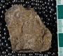 IMLS Silurian Reef Digitization Project, Image of Silurian  trilobite, specimen UC 5577