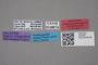 2819005 Leptusa pseudosmokyiensis HT labels IN