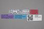 2819006 Leptusa ferroi HT labels IN