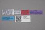 2819007 Leptusa stocksi HT labels IN
