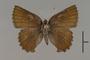 124069 Callophrys polios d IN
