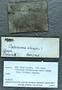 IMLS Silurian Reef Digitization Project, Image of a Silurian Gastropod specimen, PE 61628