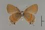124074 Calycopis cecrops v IN