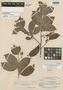 Macrolobium suaveolens var. pakarimense R. S. Cowan, BRITISH GUIANA [Guyana], B. Maguire 32210, Isotype, F
