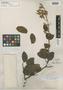 Peltogyne pubescens Benth., BRITISH GUIANA [Guyana], R. H. Schomburgk 791, Isosyntype, F