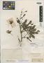 Calliandra stipulacea Benth., BRITISH GUIANA [Guyana], R. H. Schomburgk 582, Isotype, F