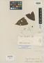 Inga leiocalycina Benth., BRITISH GUIANA [Guyana], Schomburgk 1391 [=829], Isolectotype, F