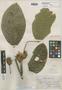 Inga bracteosa Benth., BRITISH GUIANA [Guyana], R. H. Schomburgk 695, Isotype, F