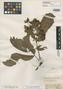 Inga corymbifera Benth., BRITISH GUIANA [Guyana], R. H. Schomburgk 226, Isotype, F
