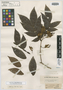 Inga disticha Benth., BRITISH GUIANA [Guyana], R. H. Schomburgk 25, Isotype, F