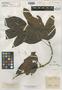 Inga graciliflora Benth., BRITISH GUIANA [Guyana], R. H. Schomburgk 756, Isotype, F