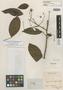 Inga leiocalycina Benth., BRITISH GUIANA [Guyana], R. H. Schomburgk 829, Isolectotype, F