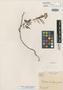 Mimosa camporum Benth., BRITISH GUIANA [Guyana], Schomburgk 725, Isotype, F