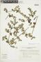 Minthostachys mollis (Kunth) Griseb., Peru, I. M. Sánchez Vega 3548, F