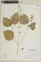 Salvia exserta Griseb., ARGENTINA, F