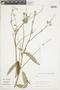 Salvia L., BOLIVIA, F