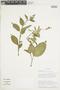Burmeistera multiflora image
