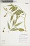 Burmeistera truncata image