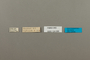 124088 Hesperia leonardus male labels IN