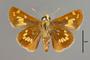 124089 Hesperia leonardus female v IN