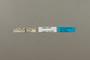 124089 Hesperia leonardus female labels IN