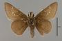 124109 Atrytonopsis hianna v IN